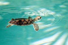 Maui_Ocean_Center-025371