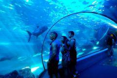 Maui_Ocean_Center-025378