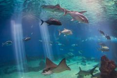 Maui_Ocean_Center-025404