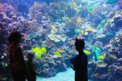 Maui_Ocean_Center-025410