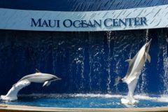 Maui_Ocean_Center-025420