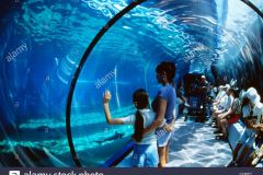 Maui_Ocean_Center-025425