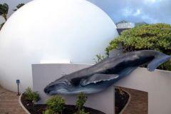 Maui_Ocean_Center-025443