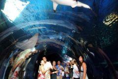 Maui_Ocean_Center-025452