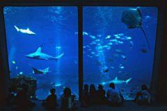 Maui_Ocean_Center-025453