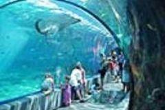 Maui_Ocean_Center-025458