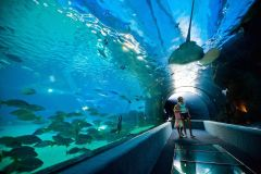Maui_Ocean_Center-025459