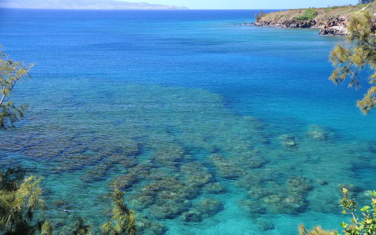 honolua bay maui 029 - Honolua Bay: One of Maui's Best Snorkeling and Surfing Spots